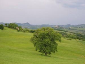 Panoramica da Massamanente con albero con Montetiffi