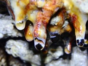 Interno grotta Montepetra